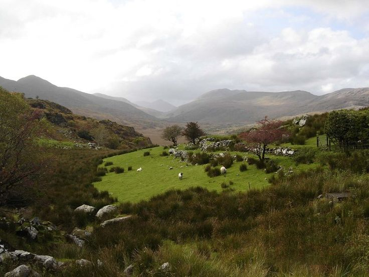 Kissane Sheep Farm in Kerry, Ireland. wallpaper