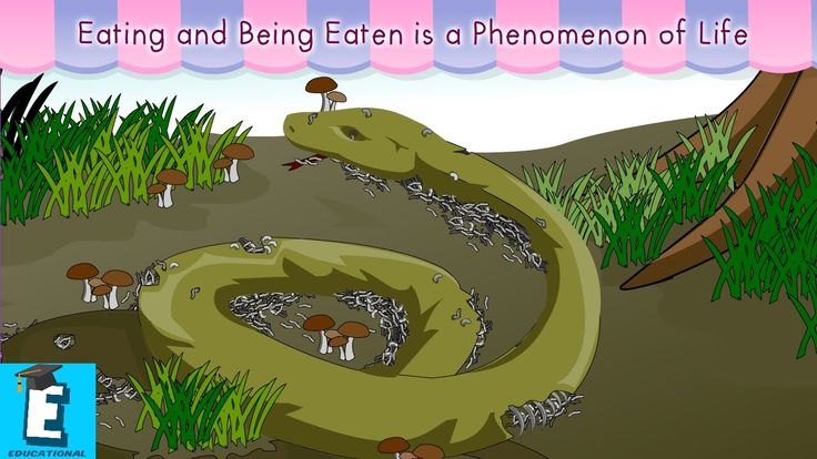 Eating and being eaten is a phenomenon of life by Educational Program Fo...