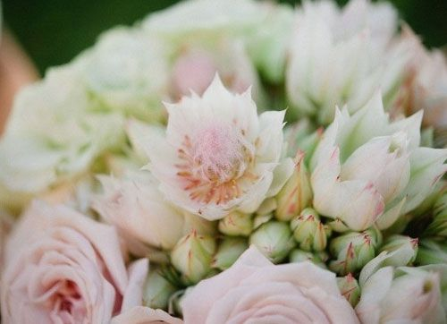 25 Best Flowers Blushing Bride Images On Pinterest Wedding Bouquets Bridal Bouquets And