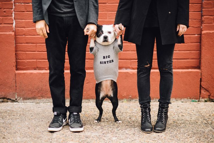 Pregnancy announcement that includes your fur family too!
