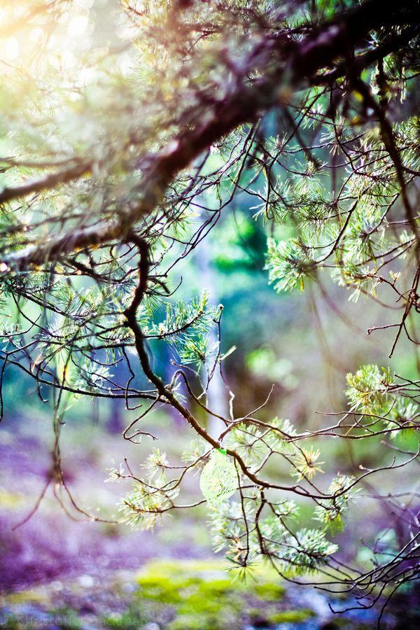 ✯ Forrest in Color