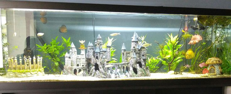 Harry Potter themed fish tank!