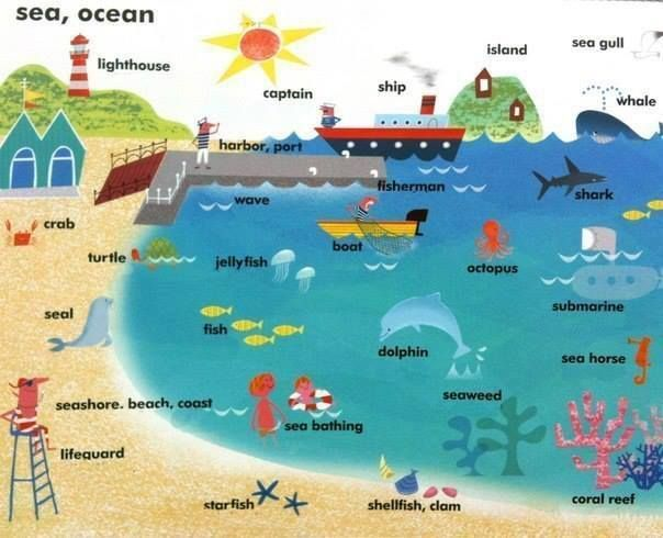 learning the vocabulary for the beach and ocean