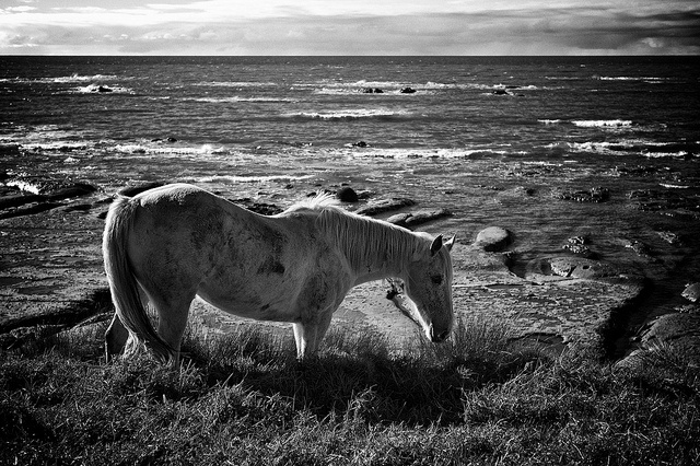 East Cape Horses by J Howe, via Flickr - http://aperturepriority.co.nz/2012/07/17/the-east-cape-road-trip/