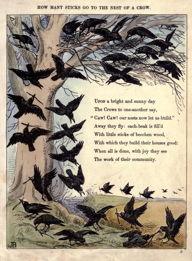 how many sticks go the the nest of a crow