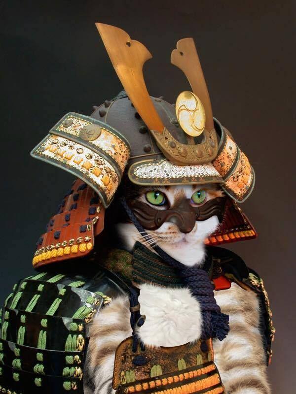 Japan - Samurai Cat