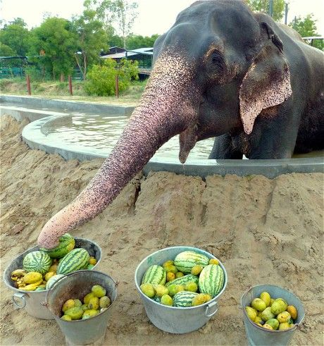 Raju the elephant enjoys new life of freedom after 50 years in chains - Telegraph