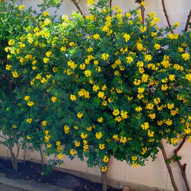Las 25 mejores ideas sobre de hoja perenne en pinterest for Arboles jardin hoja perenne