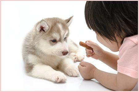 Assur O'Poil : spécialiste de la mutuelle pour animaux. Assurance chien, Assurance chat. Devis gratuit. 2 mois gratuits dès la première souscription.