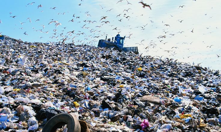 Birds stop migrating as rubbish dumps provide winter feeding grounds | Science | The Guardian