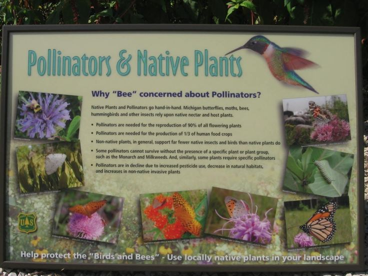 14 best Planting for Pollinators images on Pinterest   Planting ...