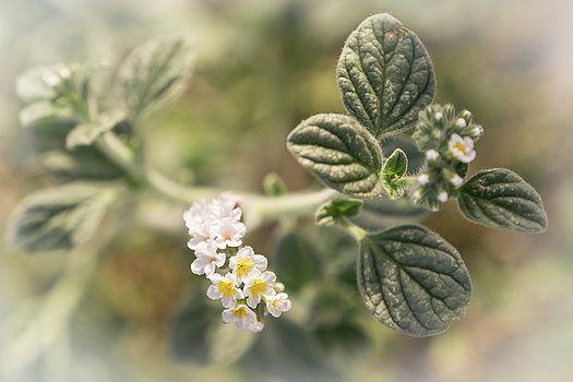 Mysterious flower by Natalya Antropova #NatalyaAntropovaFineArtFotografy#flower#HomeDecor