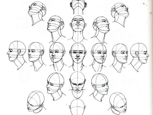 The head, at various angles, in perspective.