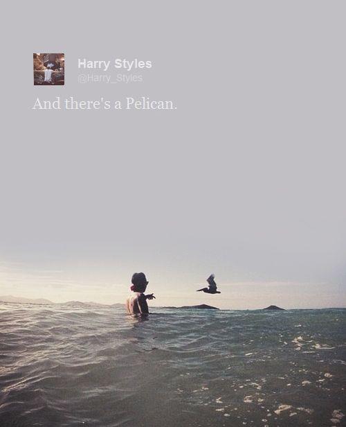 I just really love Harry