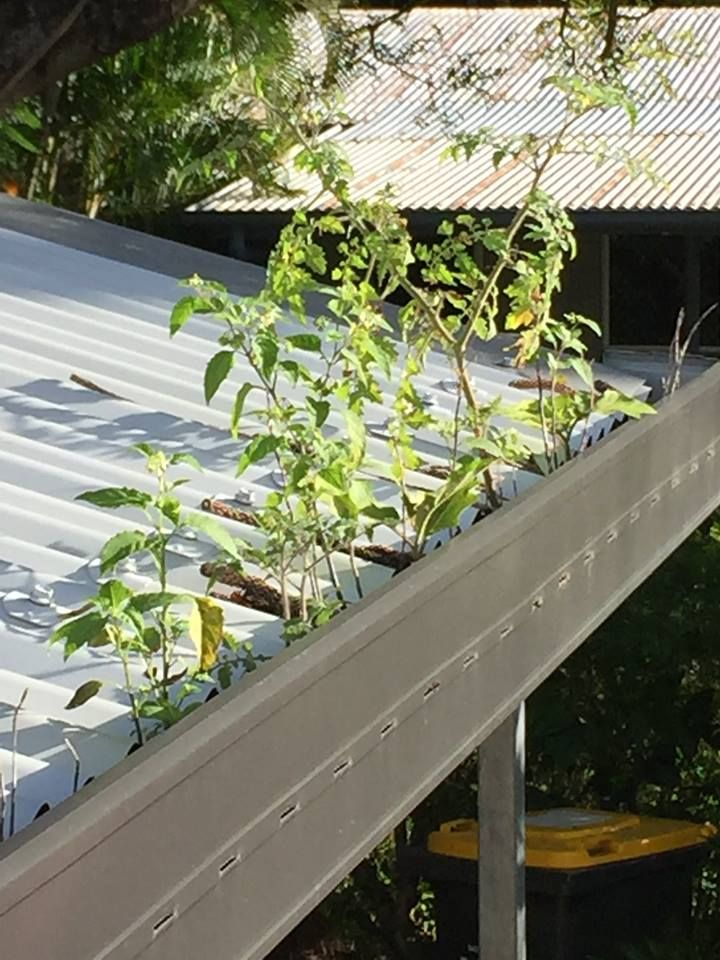 Do you have a garden growing on your roof? If so, give us a call on 1300 654 253.