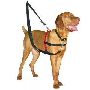 HALTI Harnais anti-traction pour chien