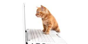 Apple Cider Vinegar and Cats? <3  https://www.pinterest.com/keymail22