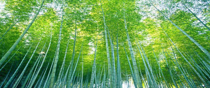 Tiger Melbourne Badkamer ~   Bamboe Meer weten bambooXL nl  http  bixbibamboe nl bamboe olie