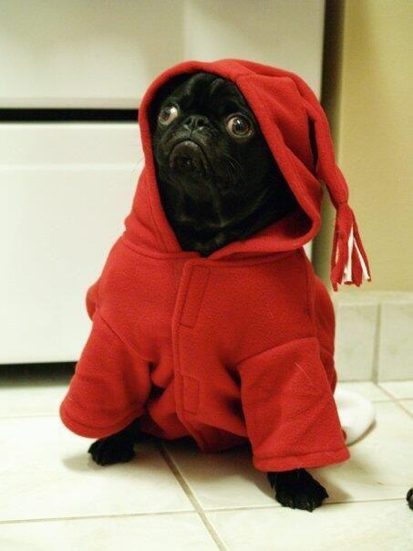 Alyssa Hanson's pug called Reginald, awwwwww !!!!