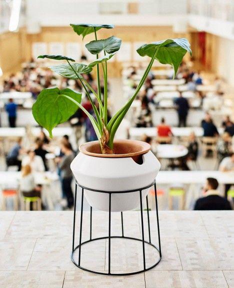 mejores 64 imágenes de botanics en pinterest | terrarios, plantas