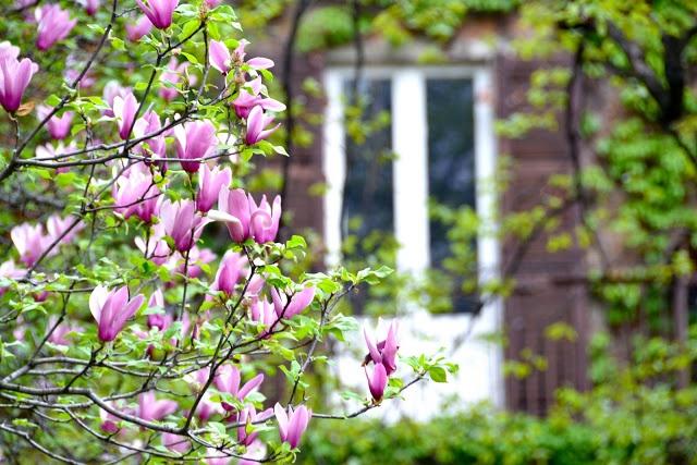L'Orto Botanico di Brera contene molti fiori belle, quale vede nel il fotografia (above)