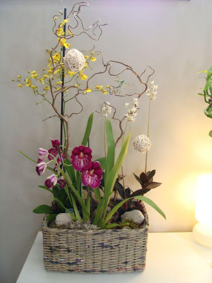 composición de orquideas variadas