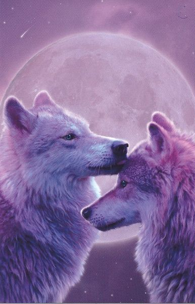 wolfs (besides the lion and bigger animals) are the kings of wild life in the wild