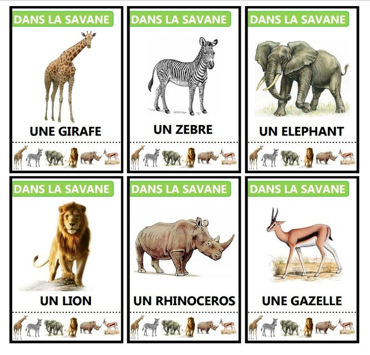 25 Best Ideas About Animaux Savane On Pinterest Zoo