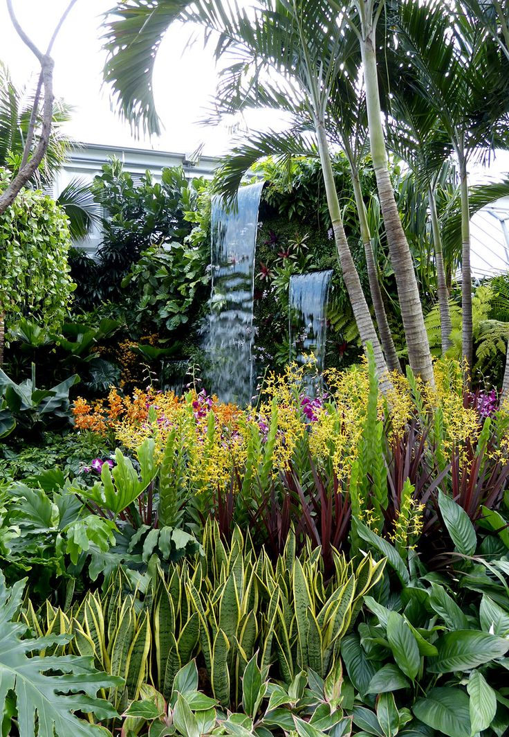 25+ Unique Tropical Garden Design Ideas On Pinterest | Back Garden Design,  Potted Bamboo And Privacy Screen Plants