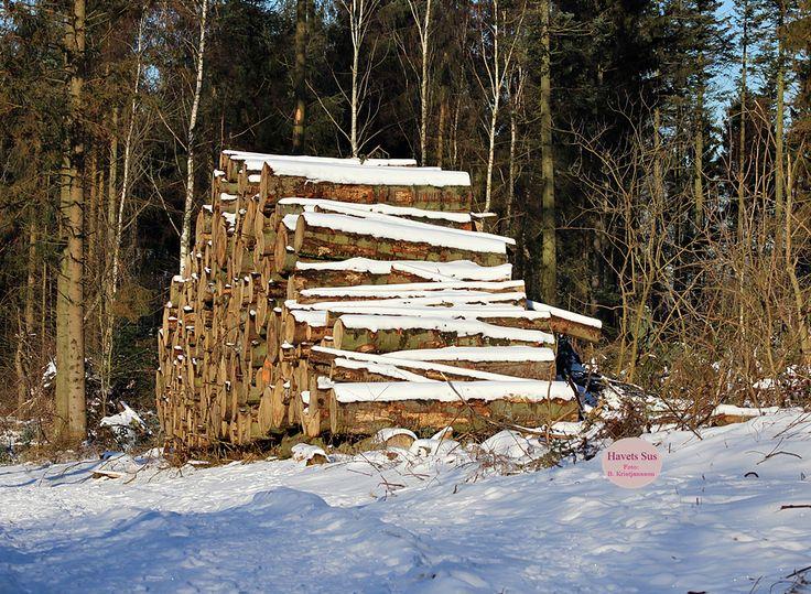 Woods, wood, skoven, winter, vinter, Denmark Danmark, Hundested, Havets Sus, nature, naturephotography, naturephoto