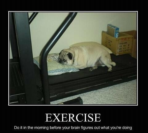 : Funny Pictures, Pictures This, Demotivational Posters, Exercise, Funny Stuff, Pugs, Baby Dogs, Funny Posters, Exerci Equipment