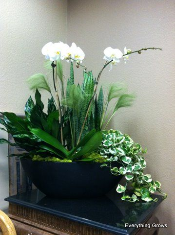 Large Indoor Container Garden Gorgeous White Phaleonopsis Orchid Mixed With Chinese Evergreen Snake Plant Plantersorchid Arrangementspotted