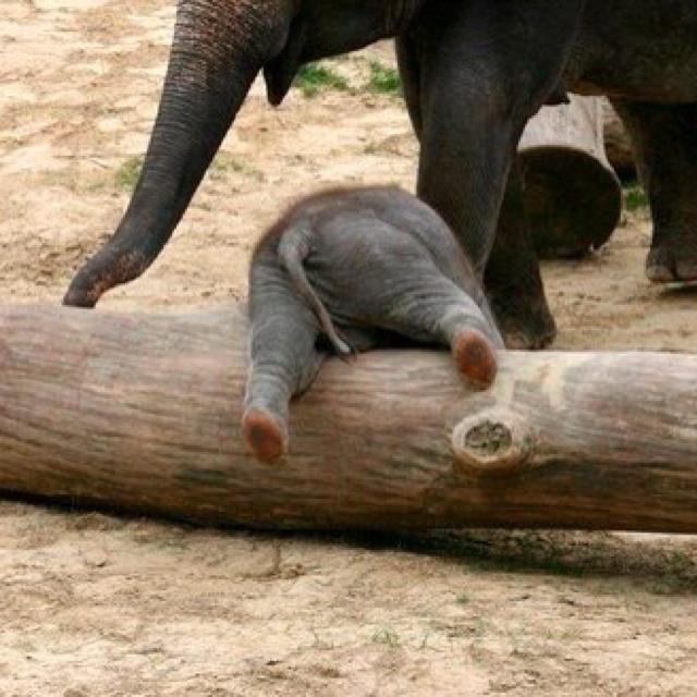 nude-mans-head-in-elephants-butt