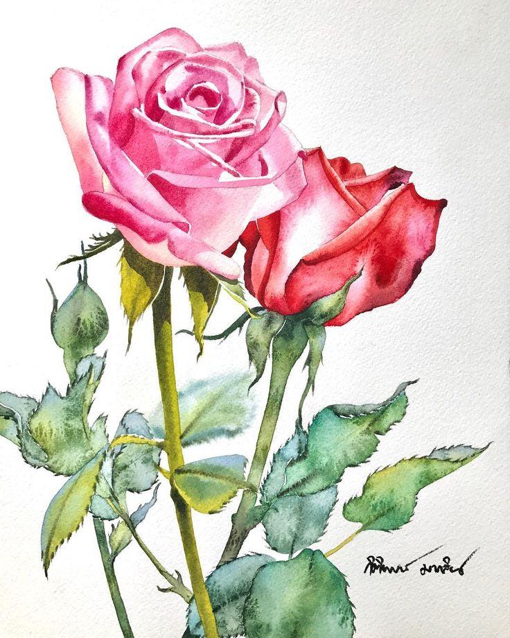 нарисовать розу акварелью фото ребята показывают средний
