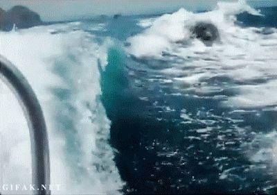 Killer Whale GIF Tumblr | ... whale freedom free CNN Power fin Mammal wal killer whale mammals tier