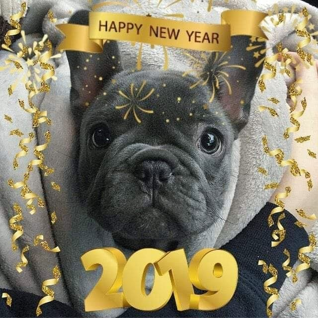 Happy New Year S E B A S T I A N Seb The Frenchie With Images