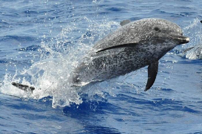1016 best images about BIG SEA ANIMALS on Pinterest ...