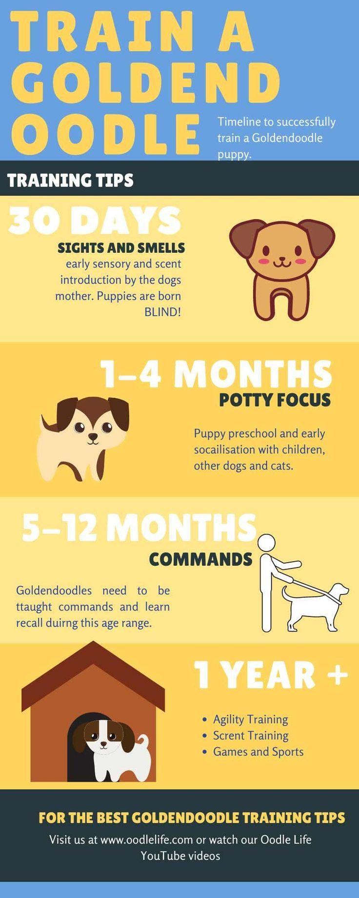 Goldendoodle Puppy Training Book Ideas