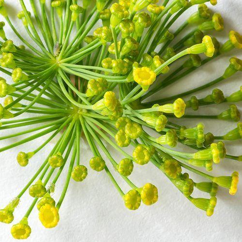 Aneto: un fiore in cucina http://www.foodconfidential.it/aneto-un-fiore-in-cucina/