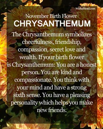 November Birth Flower : Chrysanthemum - I don't think these are quite right.