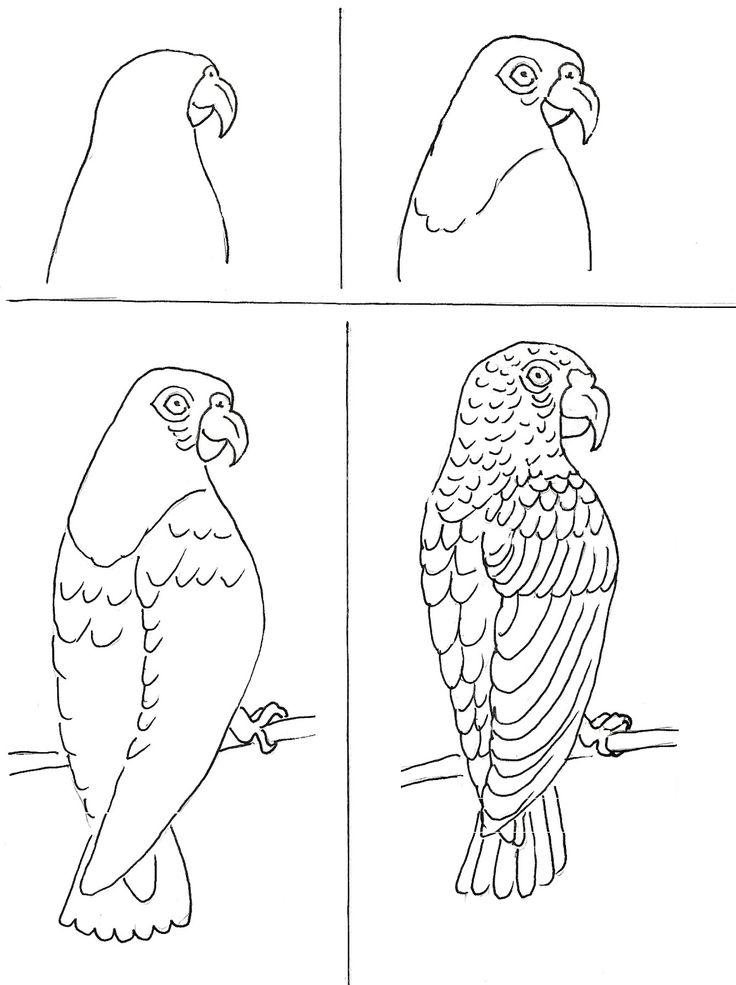 Hoe teken je een papagaai