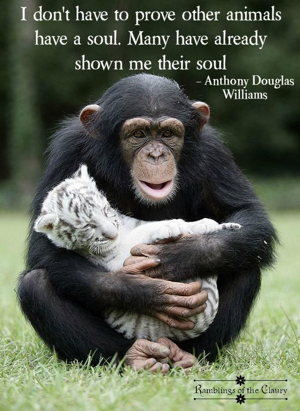 The tenderness, the love, the compassion shown by animals is proof that they have souls, as well as humanity #animals #compassion #humanity