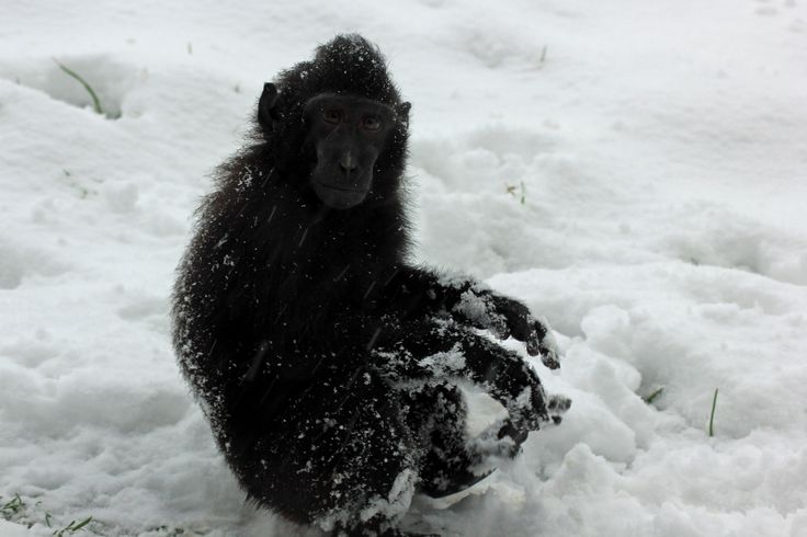 Playful macaque!