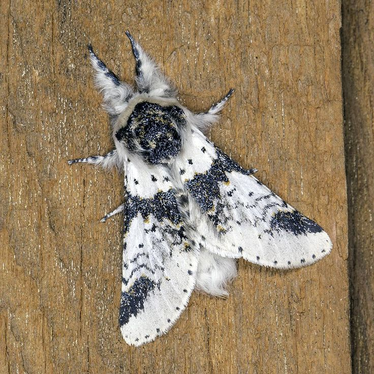 Moth Photo by Paul Yates -- National Geographic Your Shot
