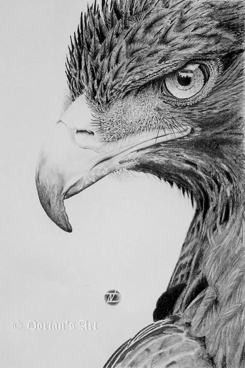 Dessin réaliste d'un aigle.