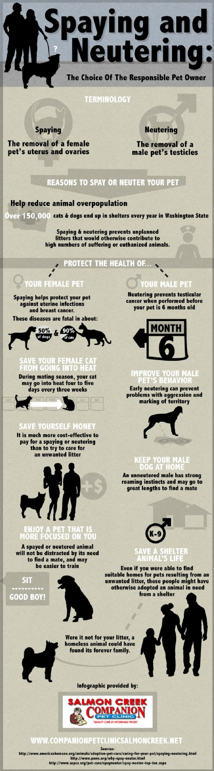 best images about pet animal infographics and vector designs on the choice of the responsible pet owner rover company blog