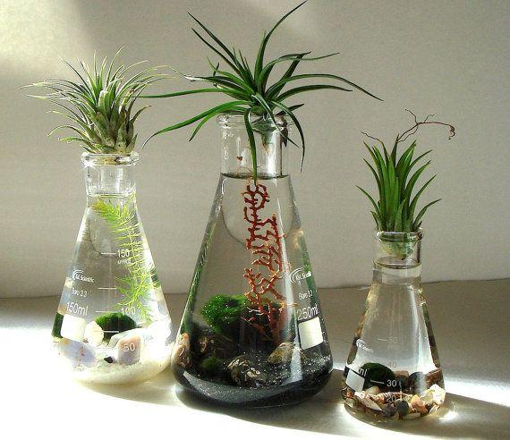 Science Set Marimo Balls Air Plants in Beaker Flasks Zen Pet Mini Aquarium / Terrarium on Etsy, $57.95
