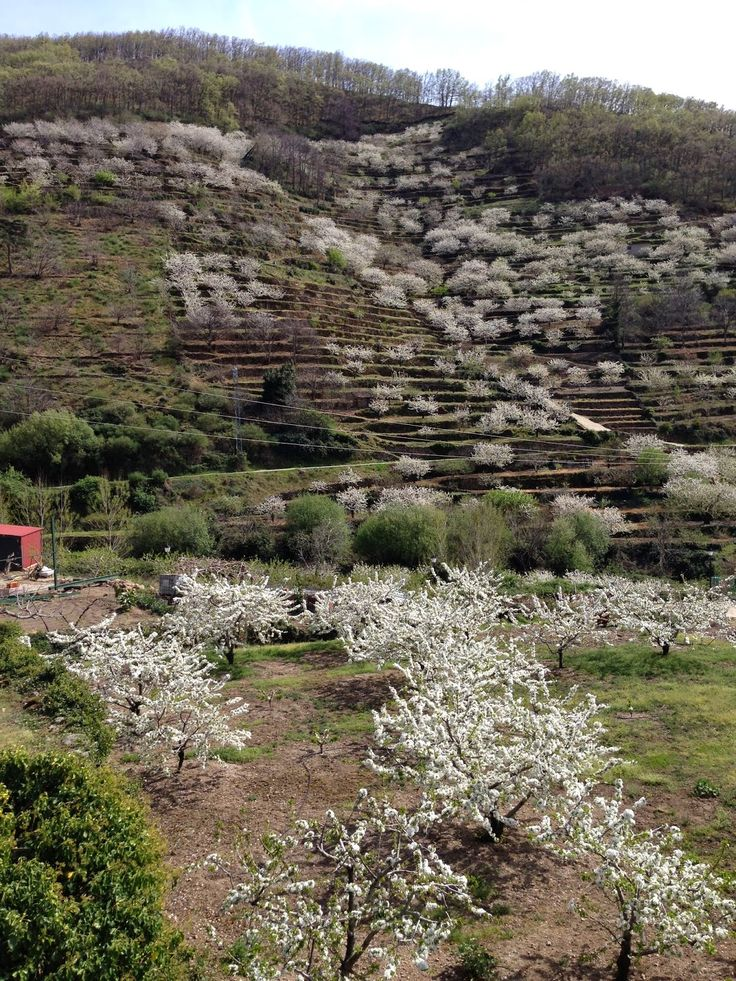 Valle del Jerte, Caceres