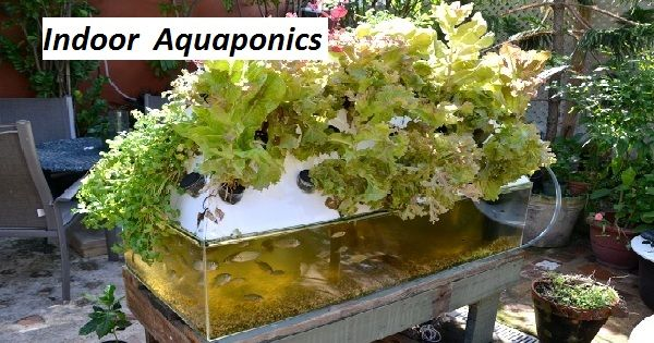 http://backyardaquaponics.page4.me/  Website For Aquaponics How To,  You should fix a proper budget when and the plant lives clean the water indoor aquaponics system for the fish.  What Is Aquaponics,Small Aquaponics System