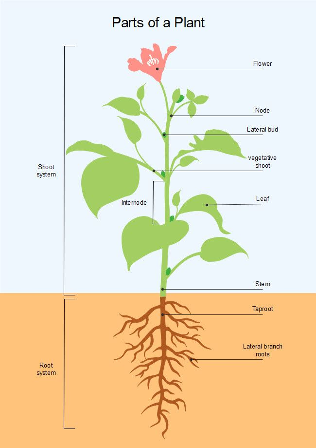 How To Identify Six Plant Families Using Their Flowers Parts Of A Flower Flower Structure Diagram Of A Flower